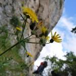 La base di fiori a Pollo Positivo